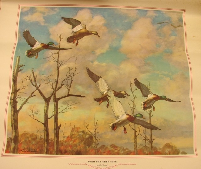 Waterfowl and Upland Game from a 1949 Calendar